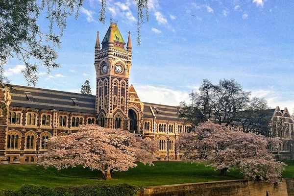colleges new zealand law